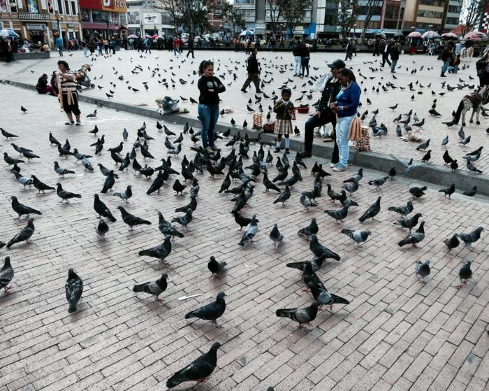 da_birds.jpg