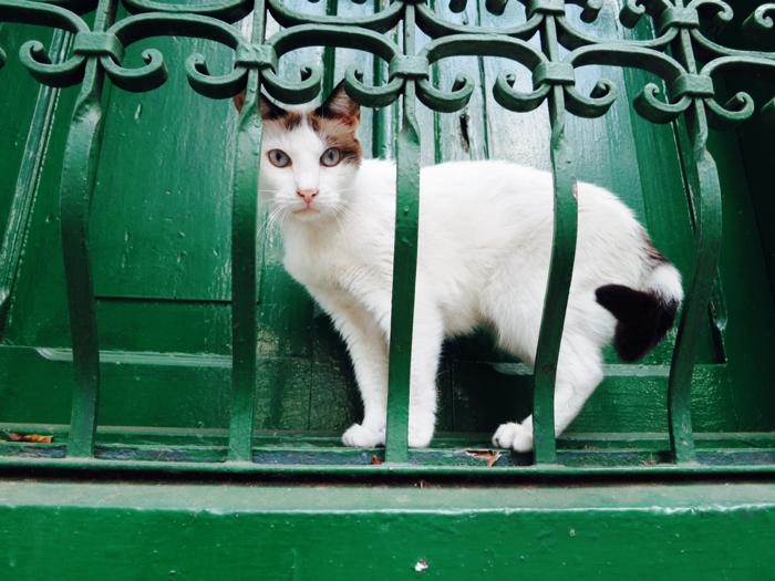 kittykat.jpg