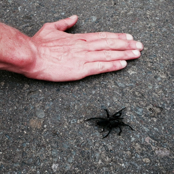 spidertonyhand.jpg