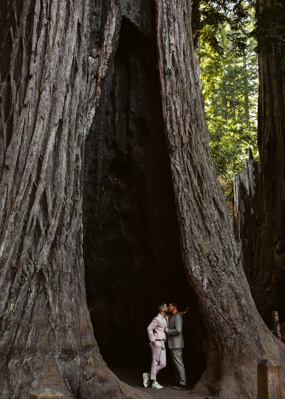 Redwood Forest Engagement Session
