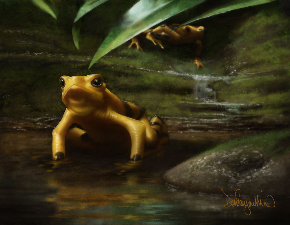 "5. ""Panamanian Golden Frog"" One of several paintings for ""IN DANGER"" (Project Safehaven004), a book of images of critically endangered animals from around the world. http://www.expeditionart.org/in-danger-book/  Medium: Digital using Painter and Photoshop. Scale/resolution: The art will print 9"" x 12"" in the book. Year Created: 2017"