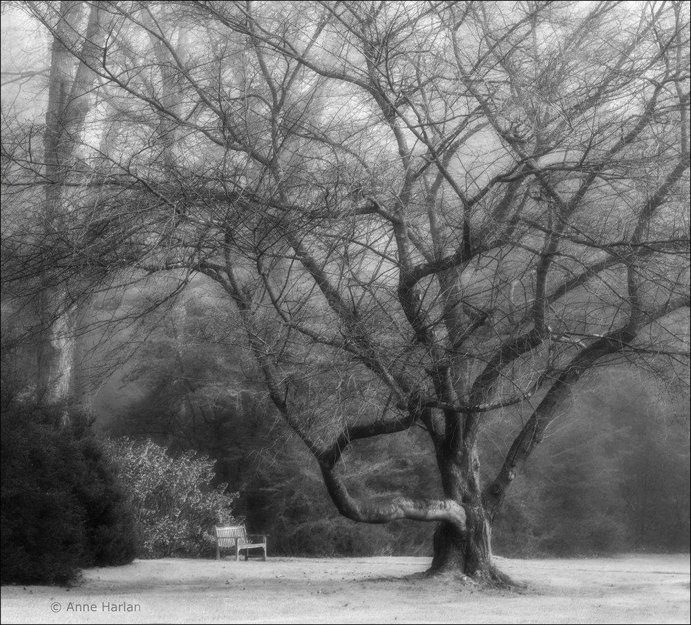20151210_Longwood Gardens & Winterthur_0270.jpg