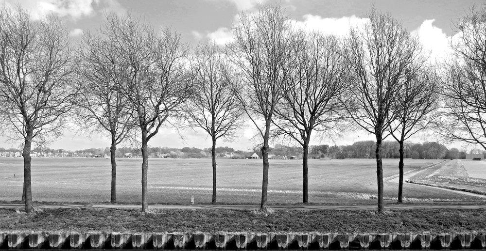 bare trees.jpeg