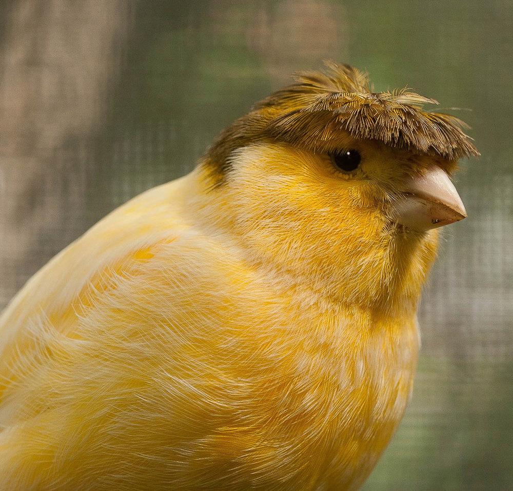 Donald Canary2.jpg