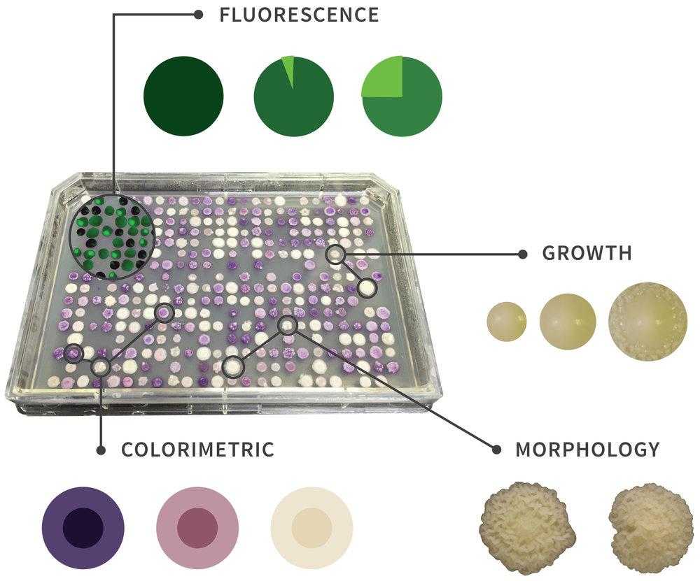 tray-assay-callouts-fluorescence-2.jpg