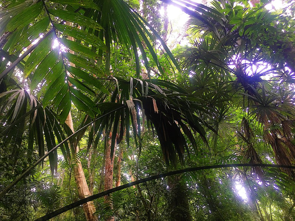 Jungle Canopy Palms