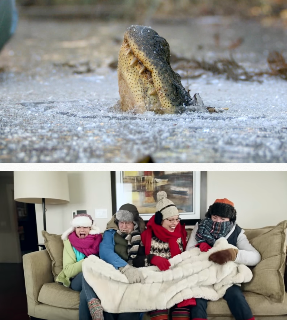 Pictured (Top): A member of a 37-million-year-old reptile species merges with ice and endures a months-long deep freeze during a harsh winter. (Bottom) The crown of creation fights over a blanket to survive a chilly afternoon.