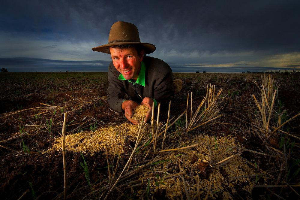 CHP_Export_11727995_Farmers enjoy the rains.Brett Hosking holds seed at his farm at Quambatook.jpg