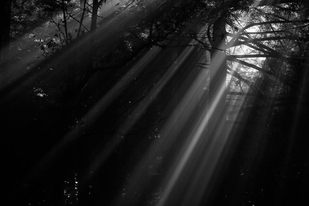 light11.jpg