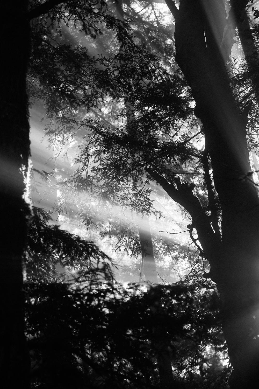 light10.jpg