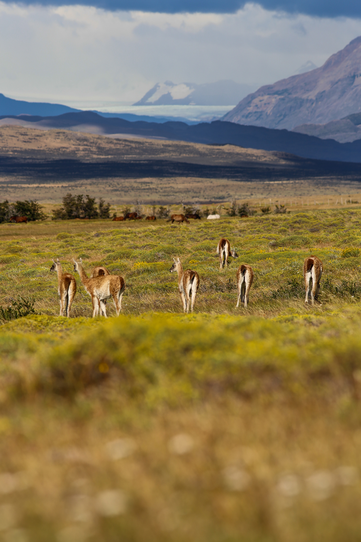 patagonia_20.jpg