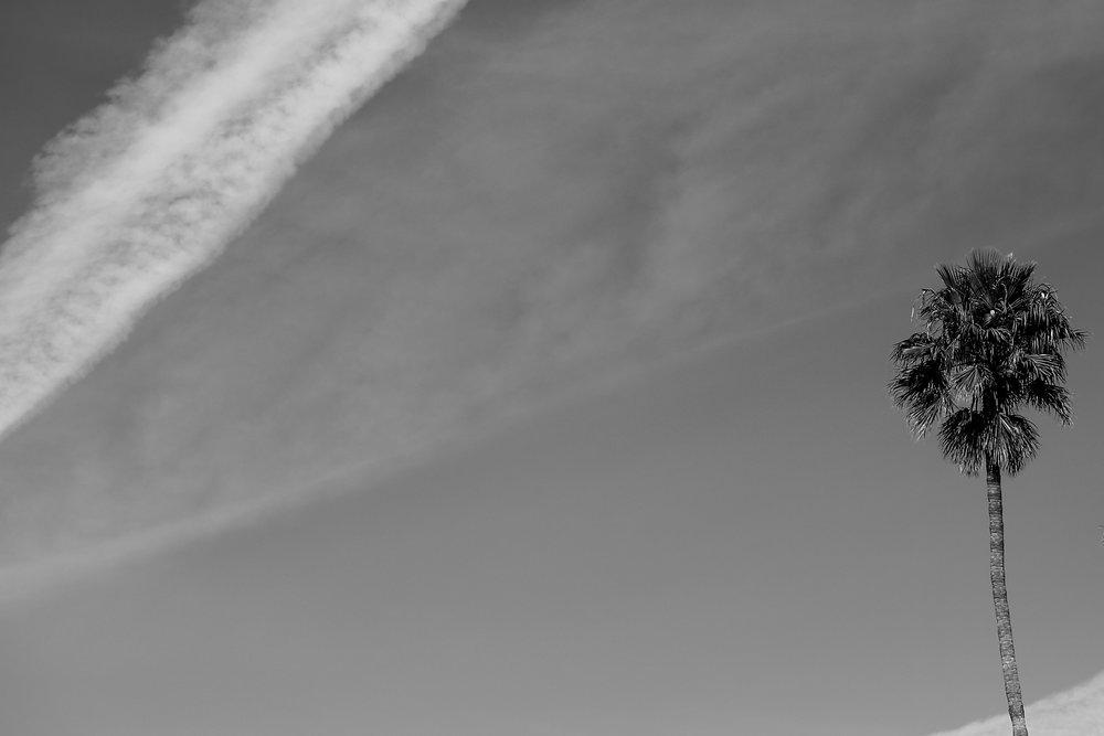 palms3.jpg
