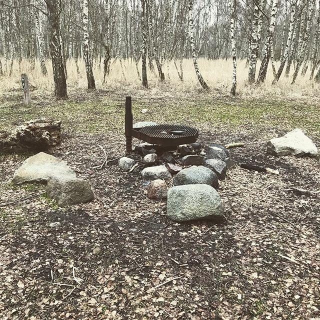 Vidste du, at Danmarks største birkeskov er Pinseskoven på Kalvebod Fælled? Det er her midt i Pinseskoven, at vores første naturbaserede mandegruppe skal mødes om en måned, hvor alting er begyndt at spire. Har du lyst til at være med? Kom med til vores infoaften den 14. marts. Læs mere på daregender.dk #daregender #mandegruppe #fællesskab #mandefællesskab