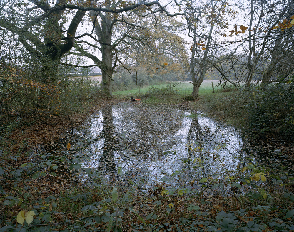 pond2web.jpg