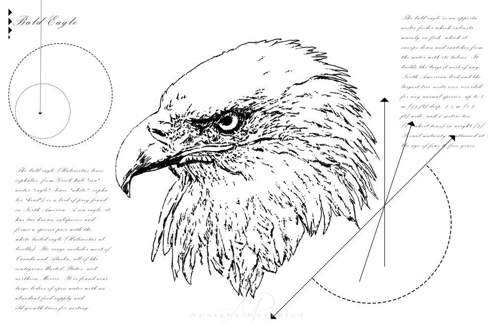 Geometry of a Bald Eagle
