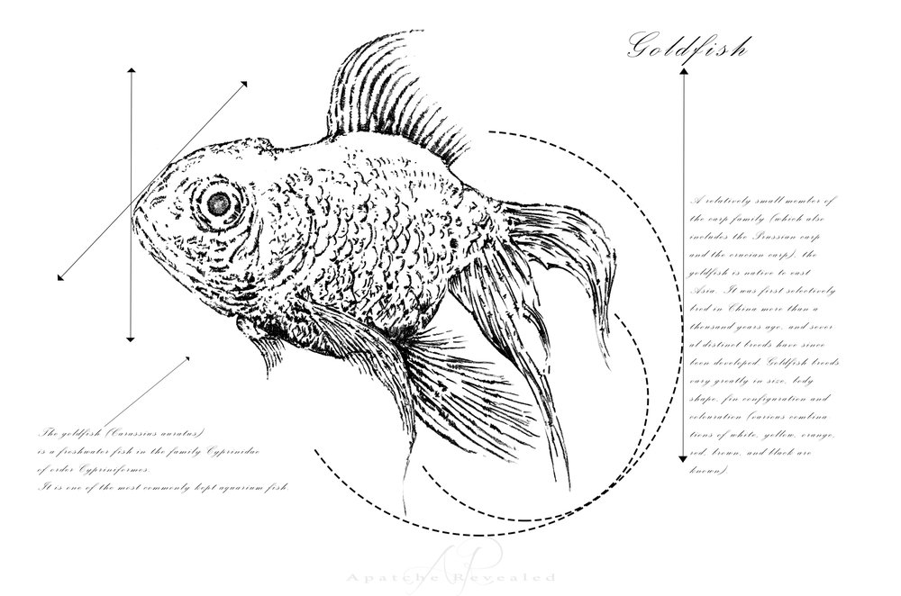 Geometry of a Goldfish