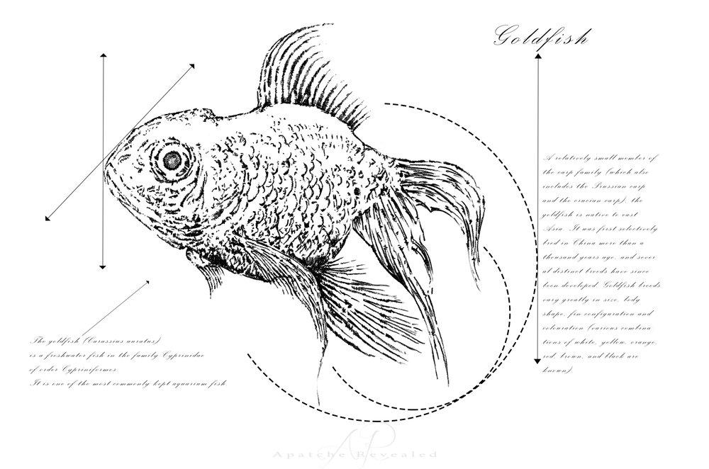 Geometry of a Goldfish