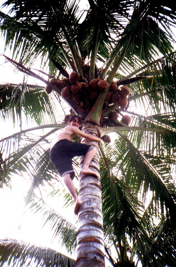 Bail 1997 Cocnut tree.jpg