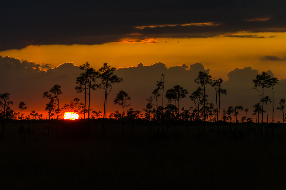 Everglades (671 of 711).jpg