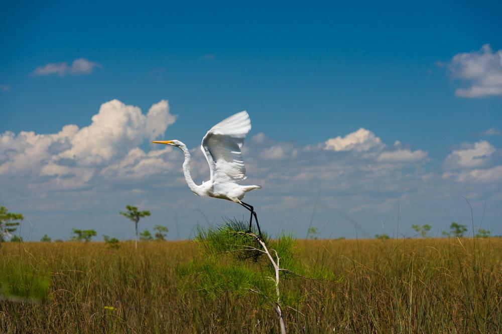 Everglades (238 of 505).jpg