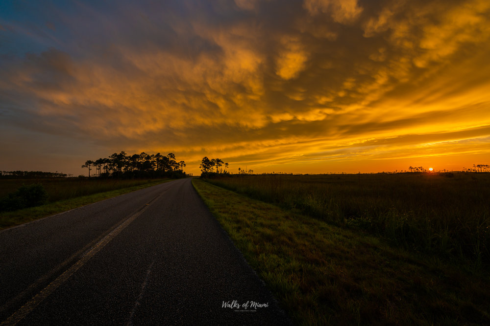 The Everglades National Park Photography Tour