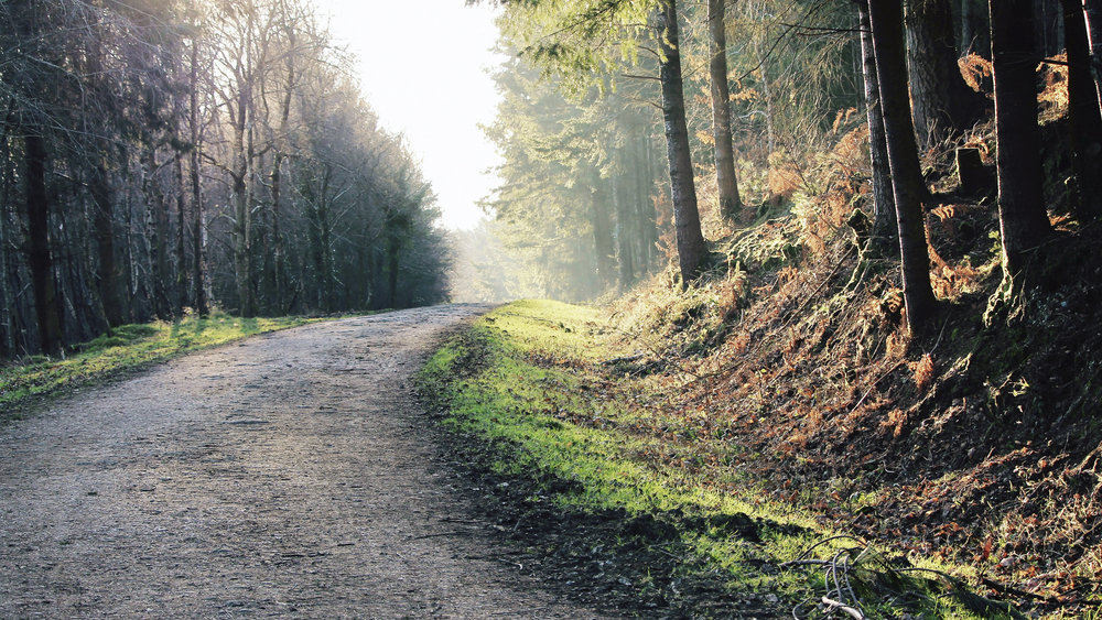 The Harris Way - Your path home.