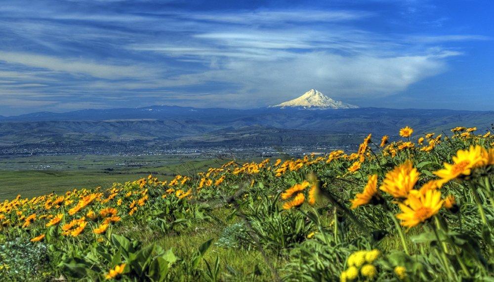 Darla Marshall Home Loans in  Oregon.jpg