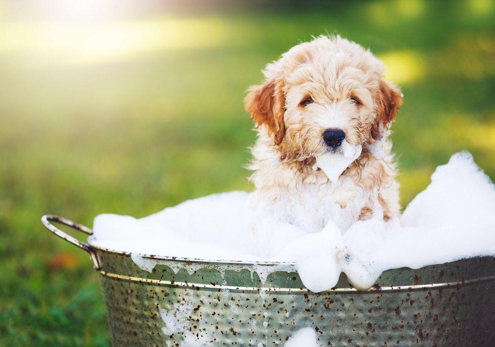 dog wash.jpeg