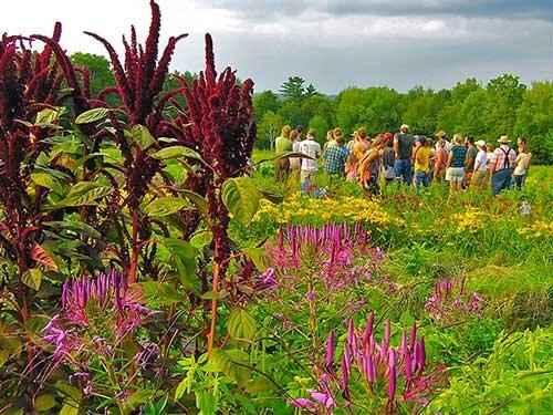 Mofga Workshop Planning Your Organic Spring Flower Garden