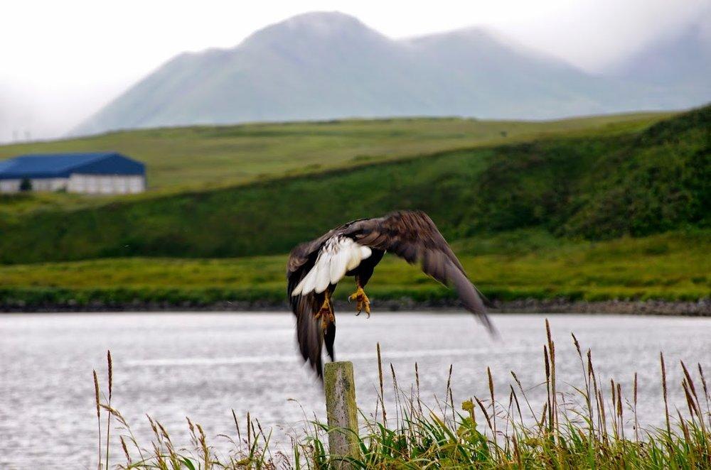 Adak, Alaska