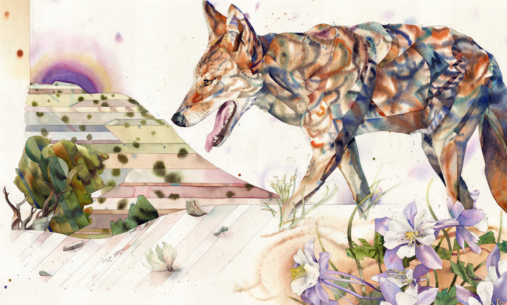 lanc coyotew.jpg