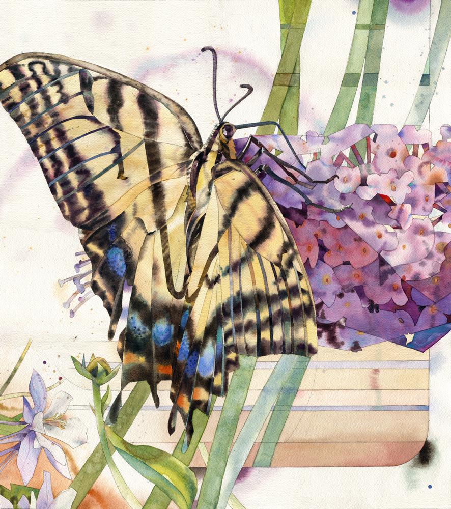lanc swallowtail-w.jpg