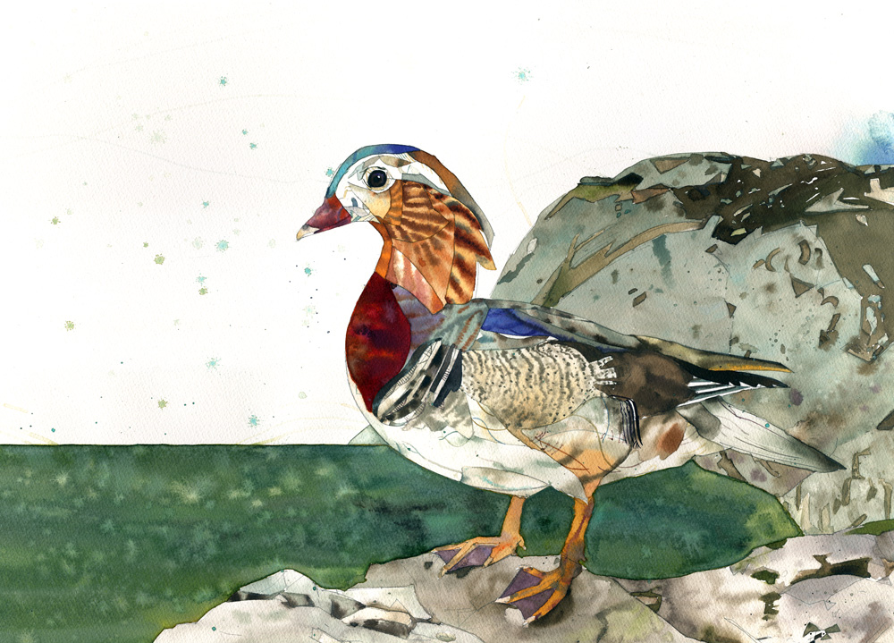 duck1w.jpg