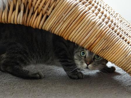 cat-485103_640.jpg