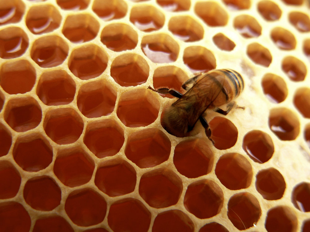 bee-on-honeycomb.jpg