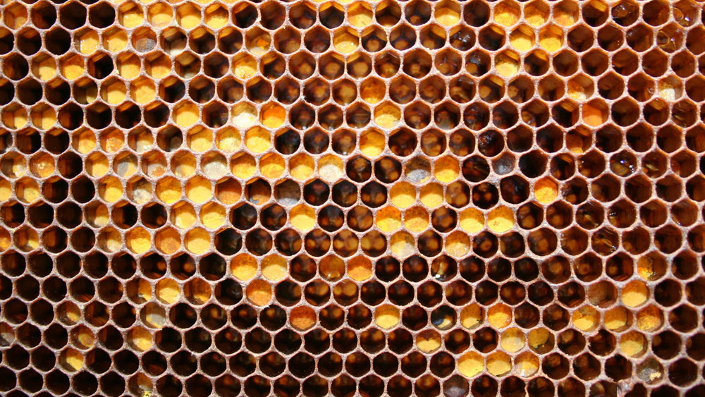 honeycombs_may_honey_honey_74295_2560x1440.jpg