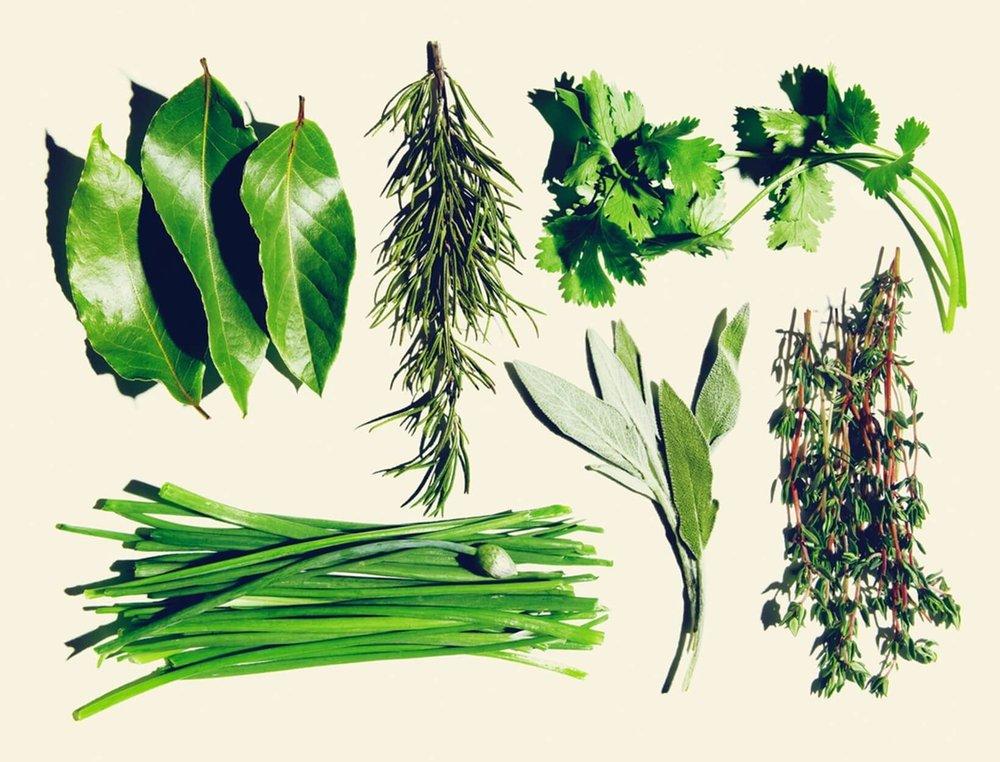 spring herbs.jpg