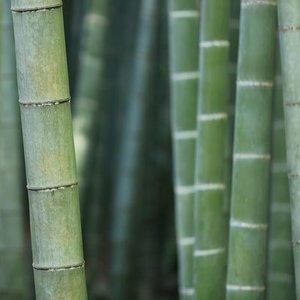 1-bamboo.jpg