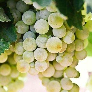 1-grape.jpg