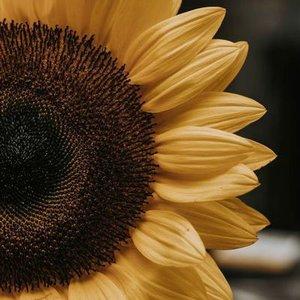 1-sunflower.jpg