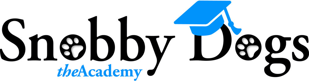Snobby Dogs Dog Grooming Courses, Training Academy