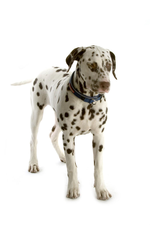DSC_0085     Snobby Dogs Day 31-10-15.jpg