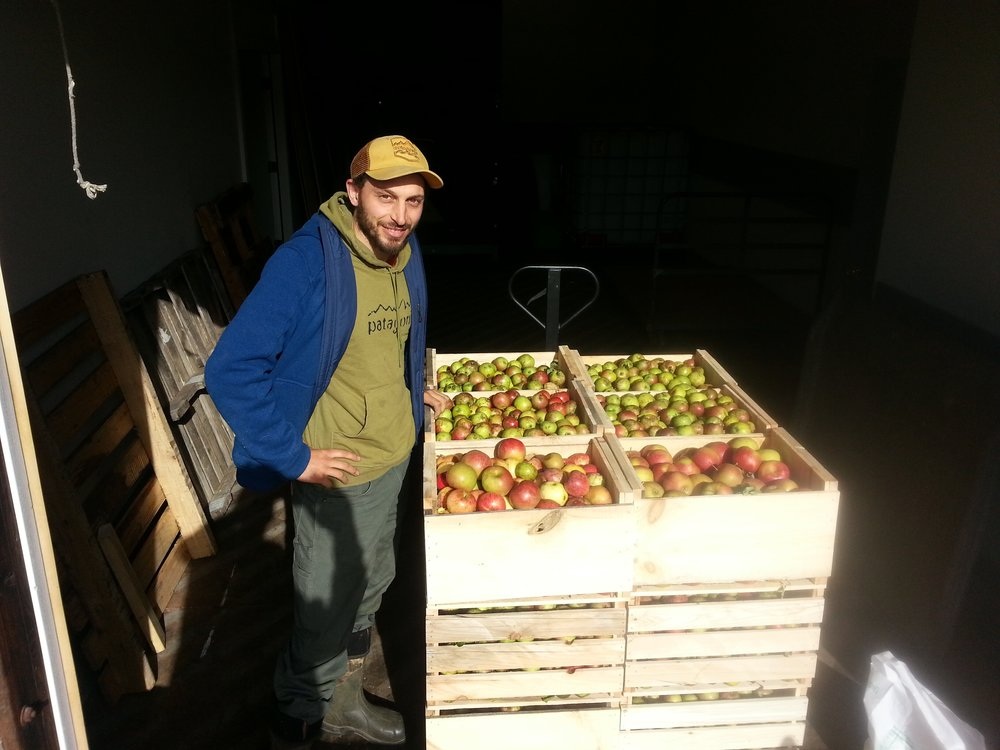Ivan with crates of apples