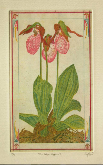 Pink Lady's Slippers