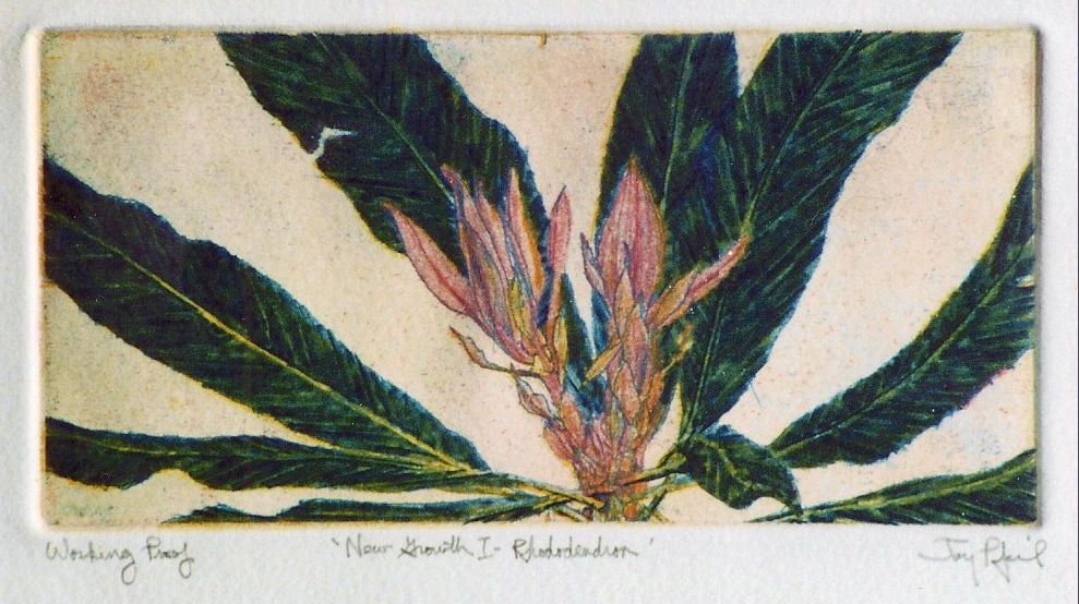 New Growth I- Rhododendron