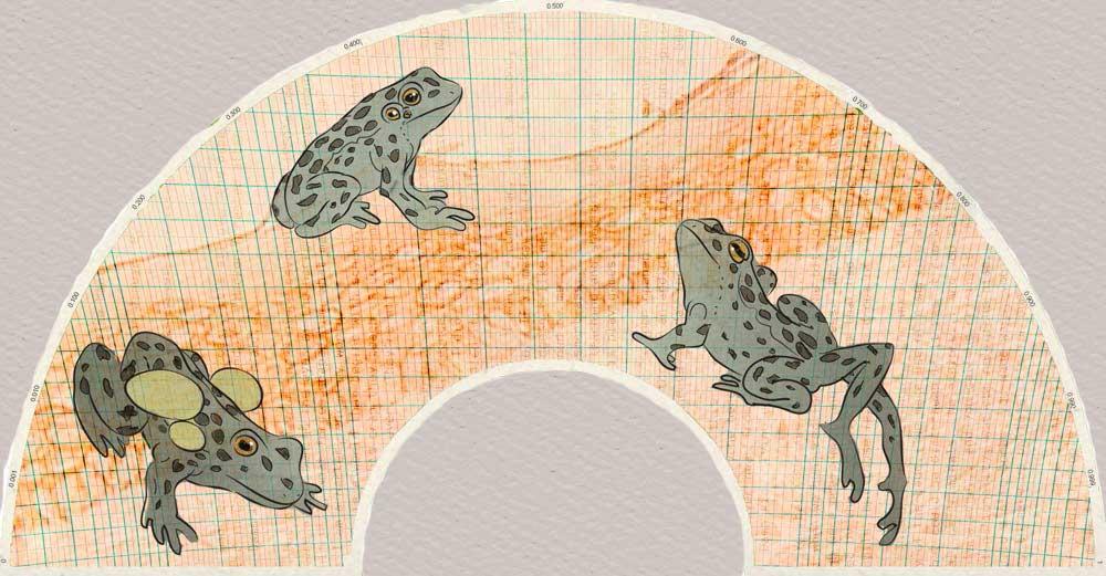 'Frog Fan' Digital Print on Unryu Paper 20x30''. 2012.
