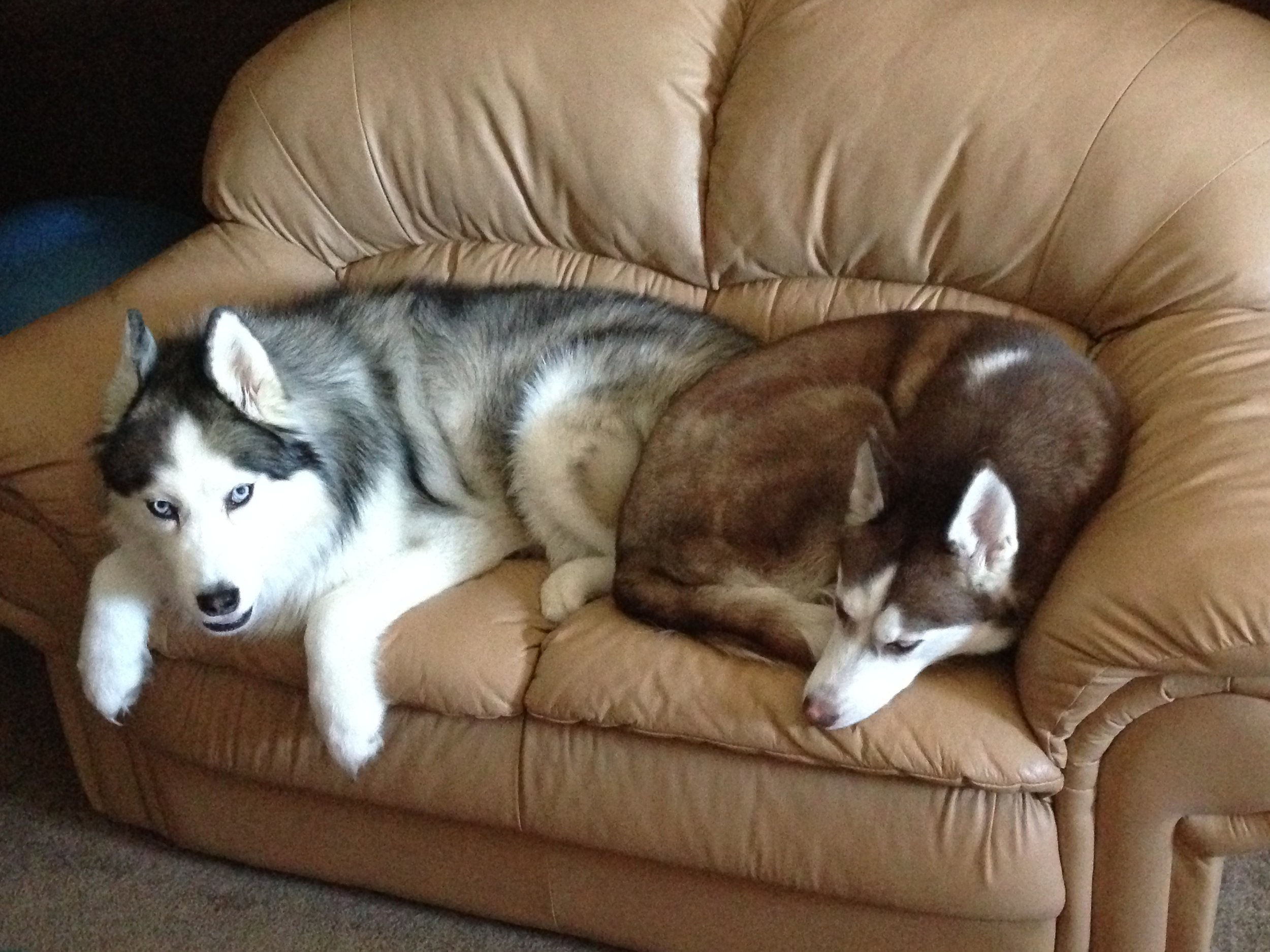dogs recovering
