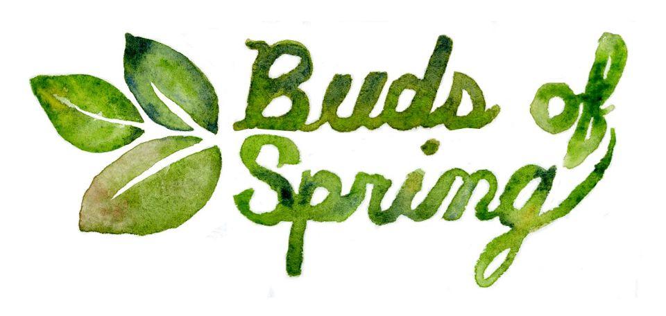 Buds of Spring.jpg