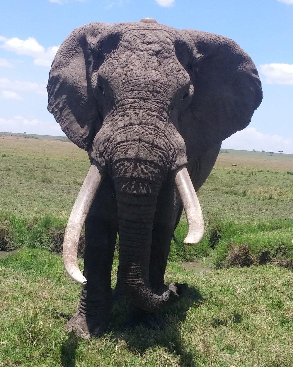 Elephant Face.jpg