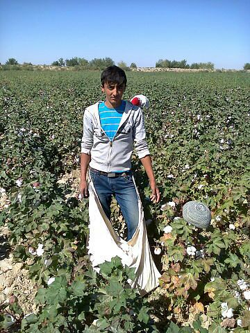 Government of Uzbekistan Increased Forced Labor of Adults in 2014 Cotton Harvest